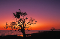OB151 Dawn, Coongie Lakes, Outback South Australia