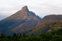 LS126 Wollumbin (Mt Warning) National Park NSW