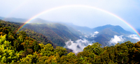 LS141 Rainbow, Dorrigo National Park NSW