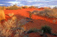 OB105 Sunset, Sand Dune, Outback Queensland